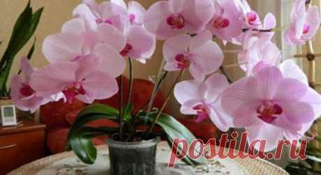 Как заставить цвести орхидею? Есть один верный способ! Буйный рост обеспечен! Хотите,чтобы ваша орхидея цвела как можно чаще? Последнего цветения ваша орхидея долго не радует вас своими цветами? Мы знаем,как стимулировать повторное цветение! Это очень про…