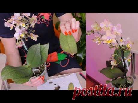 Орхидейный УЖАС! 😨 Такого поворота НЕ ожидала... 😱 ЗАПРЕВАНИЕ листьев орхидеи.