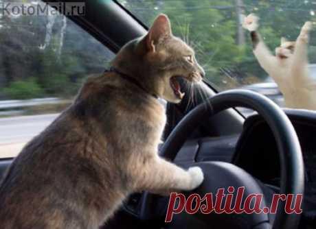 Первый день за рулём