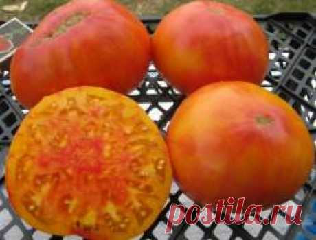 Лучшие соседи для томатов в теплице и на улице Хорошие соседи в мире растений, это не те которые растут себе рядом и не мешают основным посадкам, хорошие соседи - это растения которые готовы к взаимопомощи. Либо вредителя отгонят, или от болезни сберегут, а то и подскажут хозяевам: каких элементов в почве не хватает или о времени полива напомнят!Томаты и их соседи в открытом грунте1. Томаты и к...