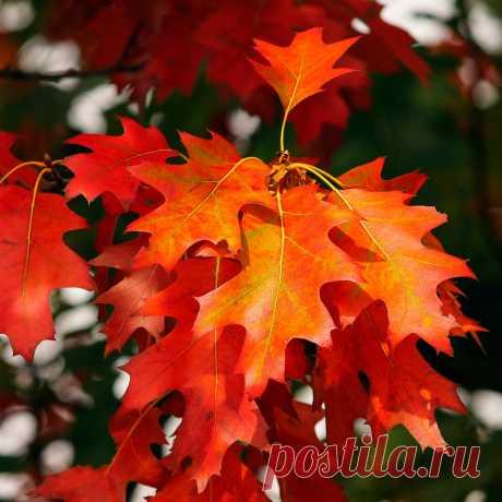 Тест: Осень и всё, что вы знаете о ней... | KUPIDONIA.RU | Яндекс Дзен