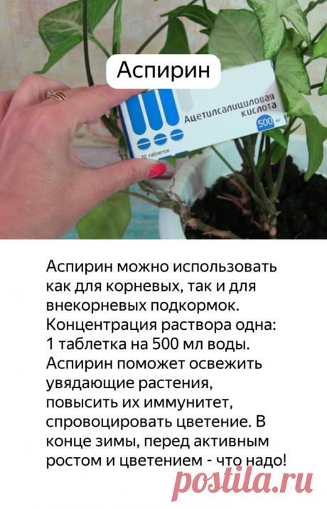 Мои ТОП-5 полезных подкормок для комнатных растений в зимний период | садоёж | Яндекс Дзен