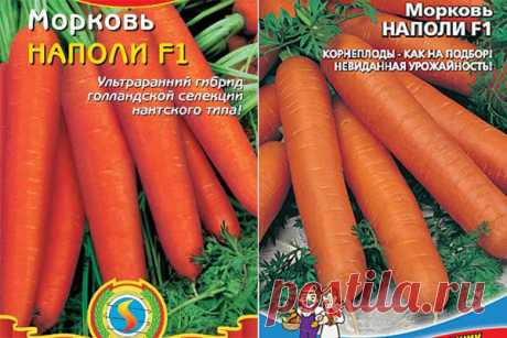 Морковь Наполи: описание сорта, фото, отзывы, характеристика, достоинства и недостатки, особенности выращивания, урожайность