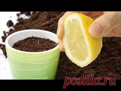 Комнатные растения и кислотность почвы. Каким растениям нужна кислая почва и почему.