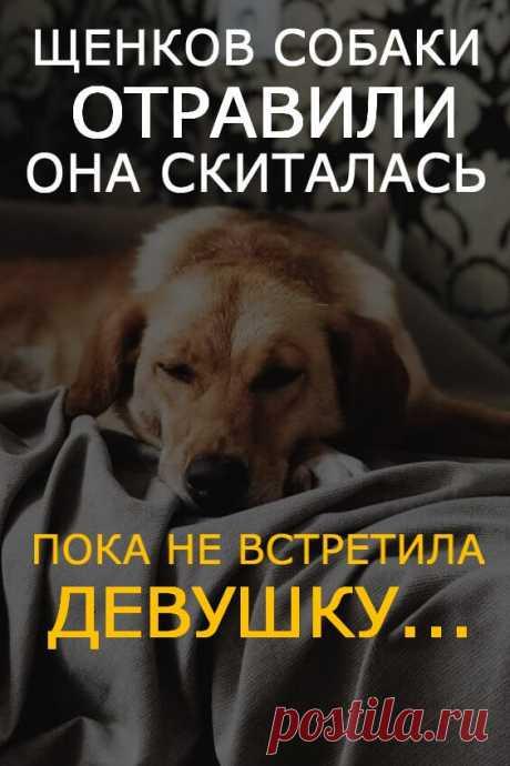 Щенков собаки отравили, а она скиталась по местности, пока не встретила девушку, готовую помочь | В темпі життя