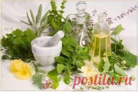 Растения, которые очистят организм от паразитов Только натуральные методы!