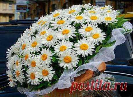 Ах, ромашки! Цветы луговые...золотисто-белый дурман... Вы как души чьи-то святые, как целительный сердцу бальзам.