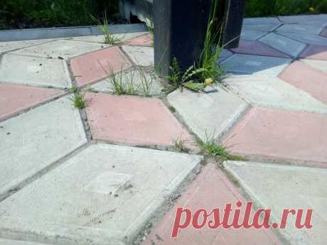 Долго мучался пока соседка не подсказала, как избавиться от травы на садовых дорожках ПРОСТЫМ и ЭФФЕКТИВНЫМ способом | 6 соток