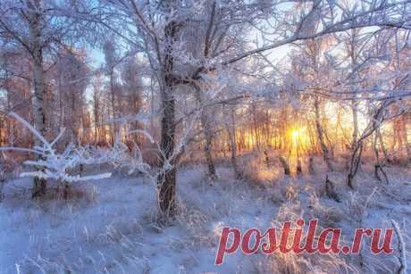 Лесная сказка в Восточном Оренбуржье. Автор фото – Павел Сагайдак: nat-geo.ru/photo/user/27077/ Доброе утро!