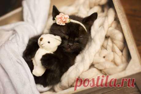 Meow-Baby от Kitty Lee | Красиво!