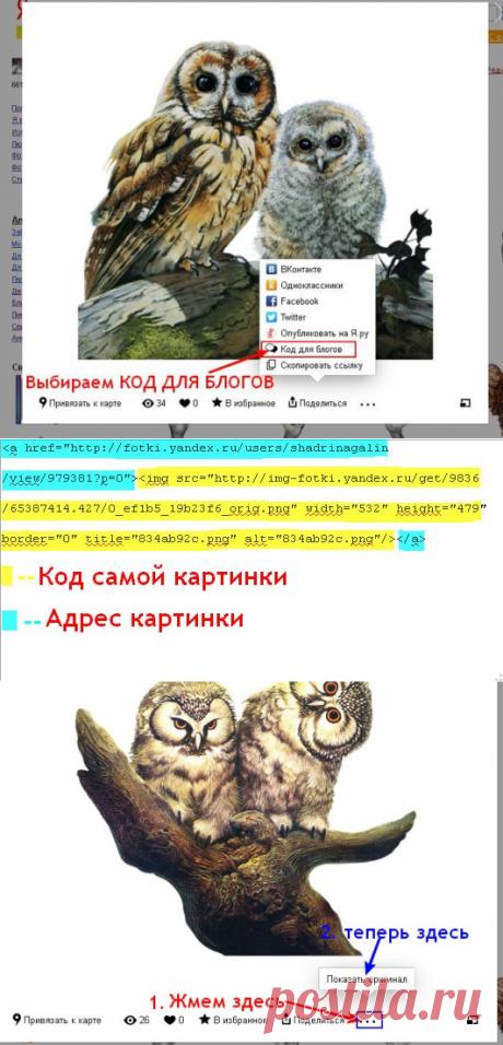 Как просматривать и брать картинки с Яндекс фото в связи с новыми изменениями