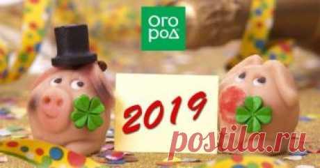 """Новогодний стол 2019: что должно быть на праздничном столе в год Свиньи Меню новогоднего стола принято согласовывать с """"гастрономическими предпочтениями"""" животного-символа по китайскому календарю. Узнаем, что же придется по вкусу Свинье – хозяйке 2019 года."""