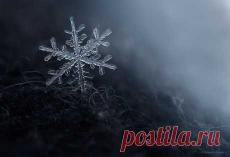 Зимний макромир. Автор фото — Сергей Полюшко