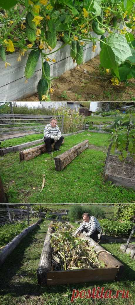 Урожайные грядки от Игоря Лядова   Самоцветик