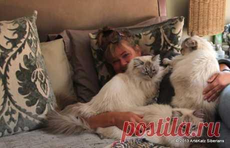 Невский маскараждный котик Formula Uspekha Danver, живет сейчас в Африке в питомнике  ArteKatz  у Cherylee Sue Powells Cherylee Sue Powells Fotos | Facebook