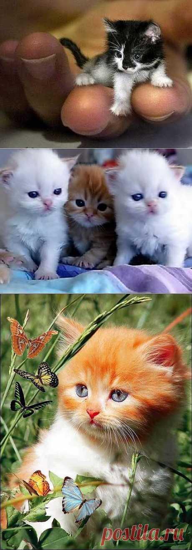 Хотим котёнка!!! | Красота Жизни