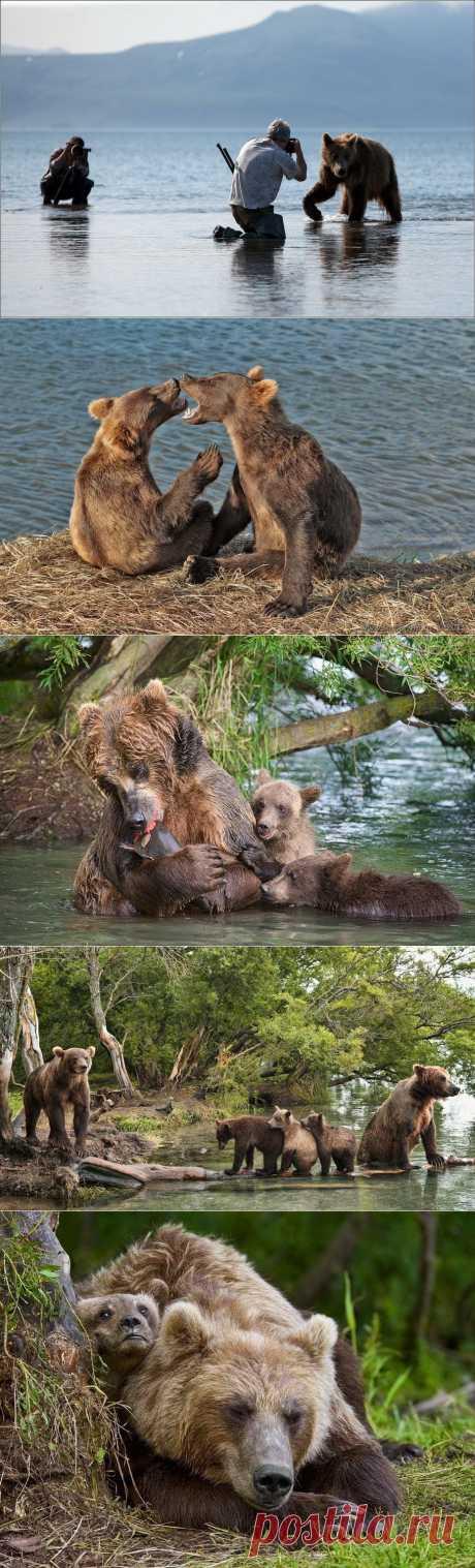 Медведи на Камчатке : НОВОСТИ В ФОТОГРАФИЯХ