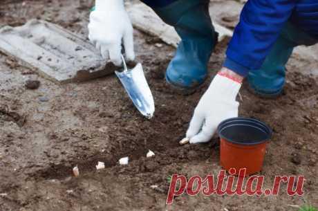 Что посадить под зиму? 20+ культур для подзимних посевов. Фото — Ботаничка.ru