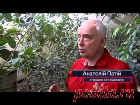 Что ожидать Украине от глобального потепления, - Cекретный фронт, 06.05