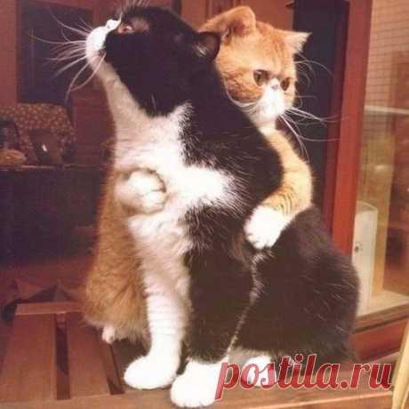 Скромная, но пестрая подборка фоток с кошками)