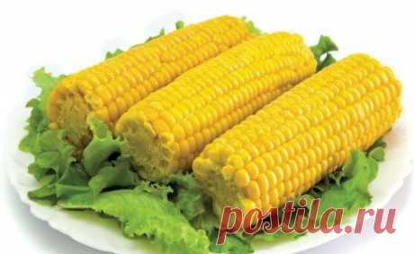 As it is correct to cook corn   Oh, damn the season of sweet corn Began, and it is eaten literally by everyone. It seems to you what you not really love? Our people just cook corn and did not hear about this way to make it more tasty. But is so really more tasty! There is a recipe. 1. Before cooking ears, break them in half. It is important. 2. Throw five halves from an ear into a pan and fill in it with water. 3. When water begins to boil, add to a pan 1 cup of milk and 1 thick kus...