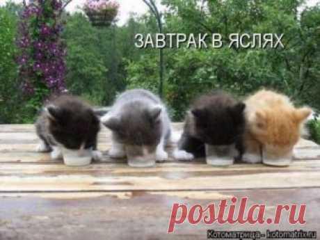 Свежая котоматрица (30 фото) Очередная замечательная порция самых свежих и прикольных котоматриц, которые вызовут улыбку и подарят приятные эмоции!