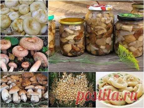 Универсальный маринад для большинства грибов Грибочки получаются ну очень вкусными!  Ингредиенты: - 1 литр воды, - 50 г сахара, - 4 ч. ложки соли, - 3 лавровых листа, - 4 гвоздики, - 6 горошин душистого перца, - 3 ч. ложки 70% уксусной эссенции (или 9% в большем количестве)  Приготовление: 1. В емкость для варки маринада влить воду, добавить специи (можно добавить и те, которые вы любите больше, например немного корицы), соль и сахар. Кипятить около трех минут, далее, вл...