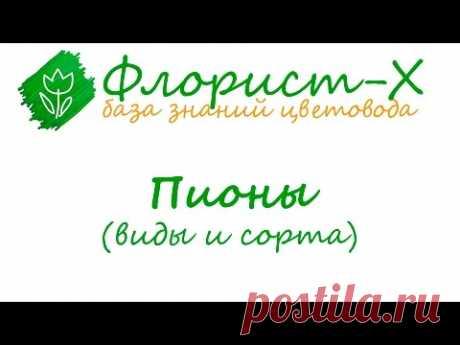 Виды и сорта пионов, болезни и вредители пионов - YouTube
