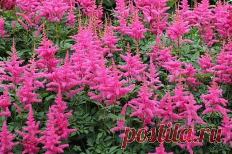 В помощь начинающему садоводу: 10 неубиваемых декоративных растений
