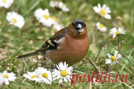2528 Spring for the chaffinch by RealMantis on DeviantArt