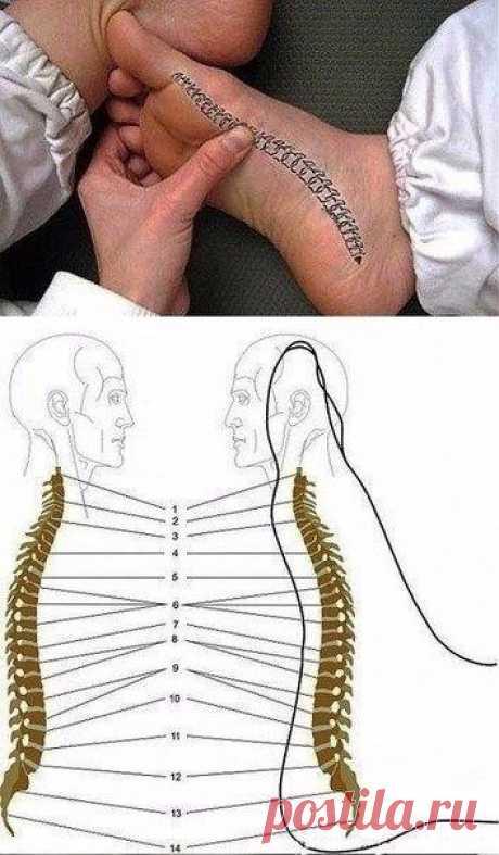 Как снять боль в спине при помощи стопы