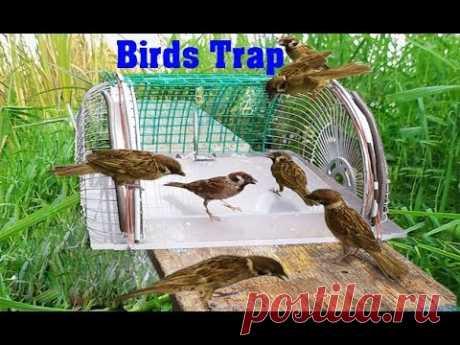 How to make bird trap at home - Amazing quick bird trap - Electric fan guard bird trap! 61