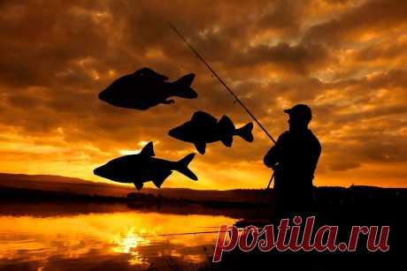 Список рыб, которых можно ловить без ограничений по новому рыболовному закону | Рыбалка XXI века | Яндекс Дзен