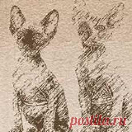 Pharaon Cats