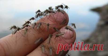 Мощное и очень простое средство от комаров Замучили комары на даче, а под рукой нет никакого антимоскитного средства? Предлагаем...