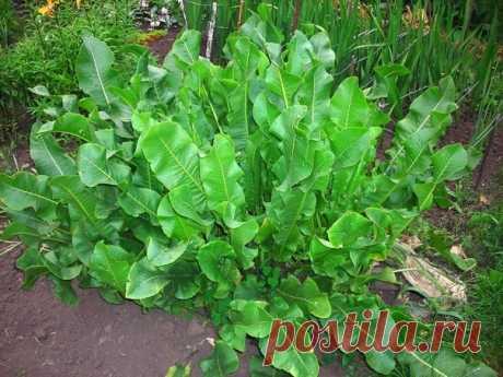 Интересные новости    Хрен – единственное растение, способное вытягивать соль через поры кожи.