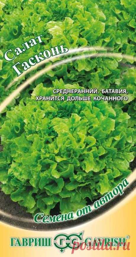"""Салат """"Гасконь"""", листовой, хрустящий"""