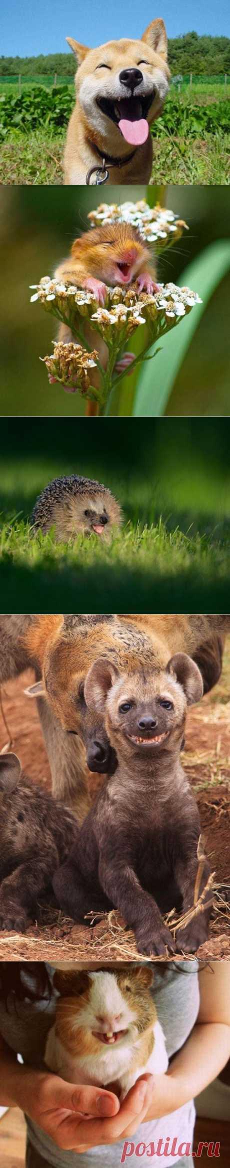 30 самых счастливых животных. Фото.