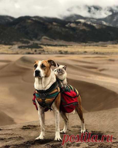 15 красивейших фото кошки и собаки, которые вместе путешествуют по миру