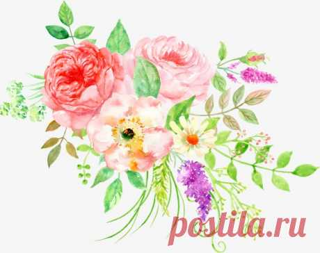beautiful floral watercolor peony flower cluster More than 3 million PNG and graphics resource at Pngtree. Find the best inspiration you need for your project.