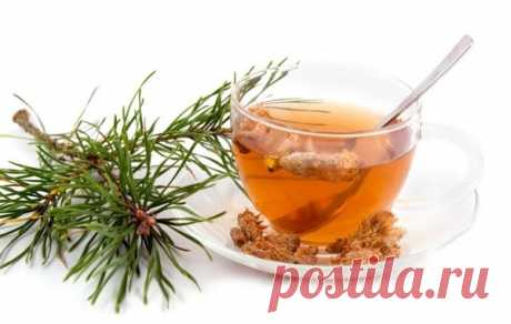 PINE KIDNEYS are CAPABLE to CURE the MOST STARTED COUGH — Kopilochka of useful tips