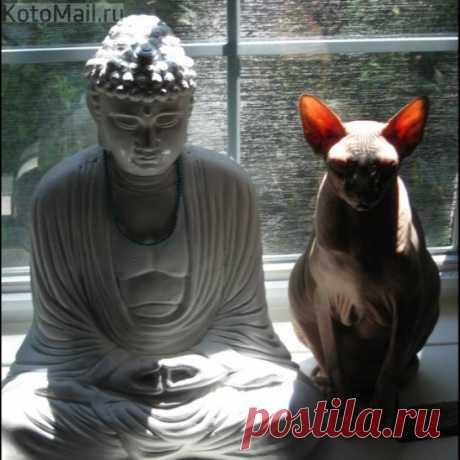 Joint meditation