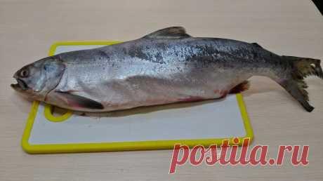 Часто покупаем Горбушу и добываем из нее красную икру. Рассказываю, как правильно выбрать рыбу и посолить икру | Морской Бриз💦 | Яндекс Дзен