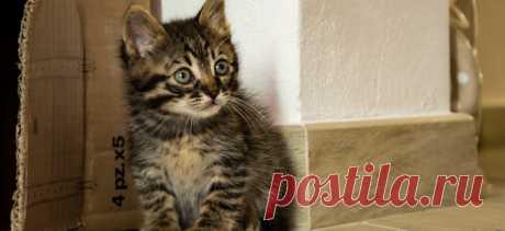 5 признаков, что вы готовы завести кошку | PetTips