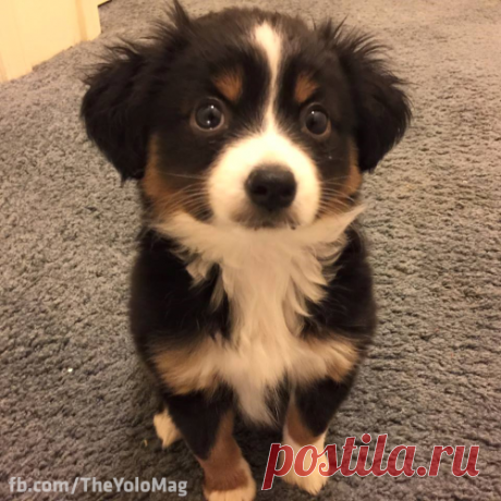 VsegoPonemnogu : cuteness–overload: Puppy eyes Source:...