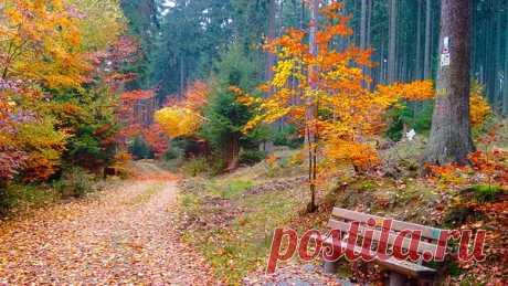 Не спеша иду я рядом с осенью По дорожке,устланной листвой, Просветлённый лес и небо в просини И чуть слышный ветер надо мной.  Величаво сверху смотрят сосенки С поднятой кудрявой головой Зелены и царственны и в осени, Также , как иной другой порой.  Шелест трав увядших и притоптанных, Паутинок нити  меж кустов . Всё сильней во всём дыханье осени- В эти дни закон у ней таков.  И совсем уж скоро снег повалится- На подходе явственней Покров, В окна ветер вновь стучать повади...