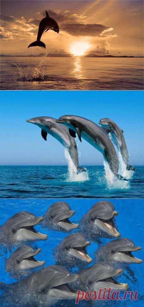Дельфины - странники морского простора!.