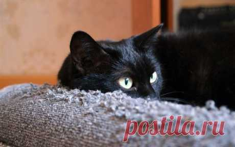 Жил да был черный кот за углом
