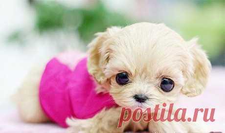 Big Eyes | Cutest Paw Это не игрушка)))