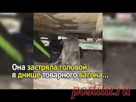Она застряла головой в днище товарного вагона… - YouTube